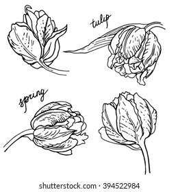Set of spring flowers tulips branches. Ink sketch collection vector illustration. Love concept for wedding invitations, cards, tickets, congratulations, branding