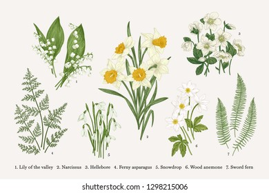 Set with spring flowers. Vector botanical illustration.