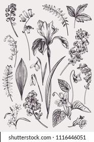 Set with spring flowers. Vintage botanical illustration. Vector floral elements. Black and white.