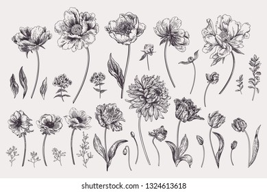Set with spring garden flowers. Chrysanthemum, peony, tulip, phlox, eucalyptus seeds. Vector botanical illustration. Black and white.