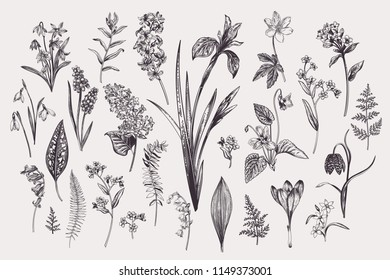 Set with spring and summer flowers and leaves. Botanical vector illustration. Vintage style. Black and white.
