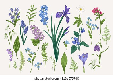 Set with spring and summer flowers and leaves. Botanical vector illustration. Vintage style.