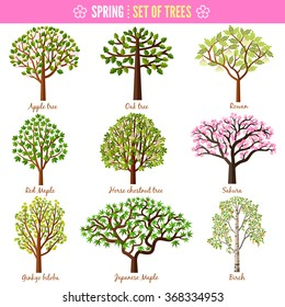 Set of spring trees on white background. Apple tree, Oak tree, Rowan, Red maple, Horse chestnut tree, Sakura, Ginkgo biloba, Japanese maple, Birch. Vector illustration