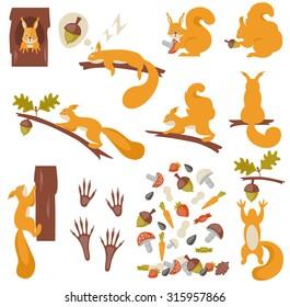 Set of squirrels cartoon. Vector illustration