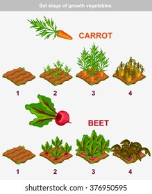 Set stage of growth vegetables 1/10. Carrot and beet in vector for playing a perspective. game element