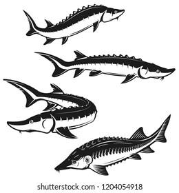 Set of sturgeon fish illustrations on white background. Design element for logo, label, emblem, sign. Vector illustration