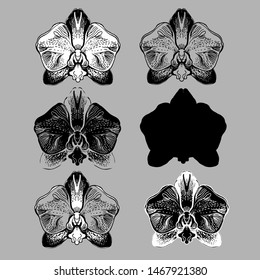 Set of stylized Orchids flowers isolated oh grey bacground. Monochrome manual graphic. Hand drawn elements for design, printing, textile, gift packade, wrapping paper, greeting card, wedding.