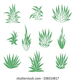 Set of succulent plant, flower isolated on white background. Vector illustration.