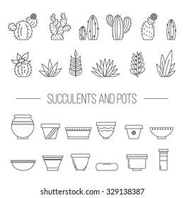 Set of succulent plants, cactuses and pots.Linear botanical vector elements.