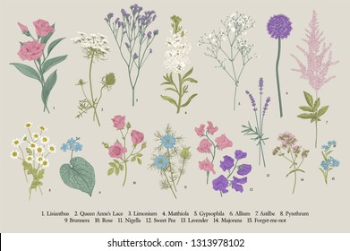 Set summer flowers. Classical botanical illustration. Wild and garden flowers