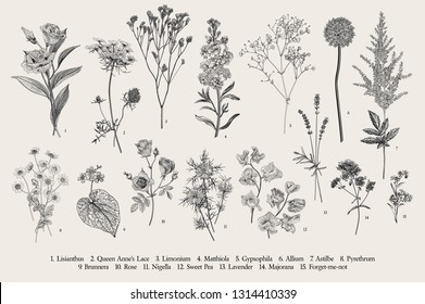 Set summer flowers. Classical botanical illustration. Wild and garden flowers. Black and white