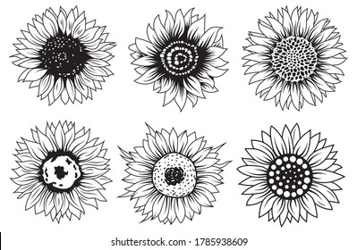 Set of sunflower flowers. Collection of silhouettes stylized blooming plants. Autumn flowers. Vector illustration on white background. Floral logotype. Tattoo.