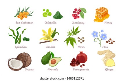 Set of superfood isolated. Vector illustration of Sea buckthorn, Chlorella, Cranberry, Honey, Spirulina and Vanilla. Hemp seed, Flax, Coconut, Avocado, Pomegranate and Ginger in cartoon flat style.