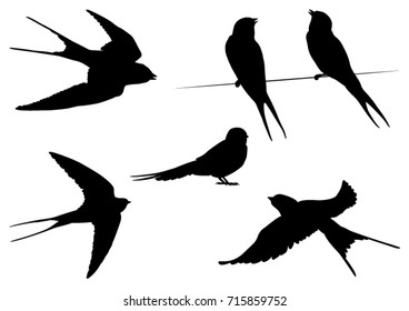 Set of Swallow Bird Silhouettes - Vector Illustration