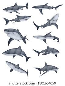 Set of swimming shark icons. Underwater world