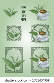 Set of tea leaves and tea cup with patterned frames. Vector illustration of a tea in engraving style, its name in English, Chinese, Thai and Hindi, in colors.