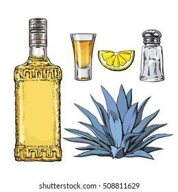 Set of tequila bottle, shot, salt mill, agave and slice of lime, sketch vector illustration isolated on white background. Set of hand drawn tequila glass and bottle, salt, lime and agave cactus