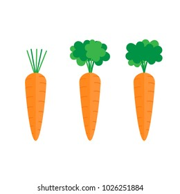 Set of three carrots with green leaves. Sweet vegetable, orange carrot with tops, stalks. Carrot vector graphic illustration.