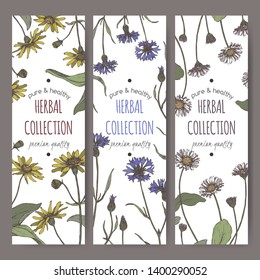 Set of three color labels with Arnica montana aka mountain arnica, Centaurea cyanus aka cornflower, Bellis perennis aka daisy sketch. Herbal collection. Great for traditional medicine, or gardening.