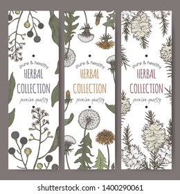 Set of three color labels with camphorwood or camphor laurel, Dandelion and tea tree sketch. Green apothecary series. Great for traditional medicine, gardening or cooking.