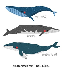 set of three illustration of cute cartoon whales on white background. set with blue, fin and humpback whales. can be used like stickers or for greeting cards template or posters