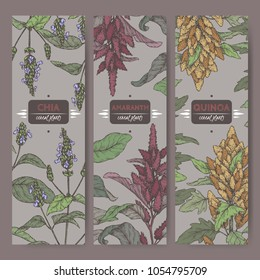 Set of three labels with amaranth, quinoa and chia color sketch. Cereal plants collection. Great for bakery, agriculture, farming design.