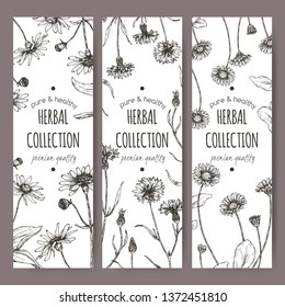 Set of three labels with Arnica montana aka mountain arnica, Centaurea cyanus aka cornflower and Bellis perennis aka daisy sketch. Herbal collection. Great for traditional medicine, or gardening.