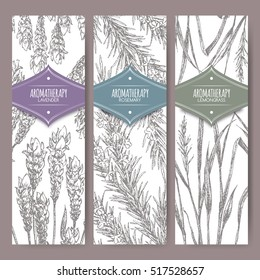 Set of three labels with lavender, rosemary and lemongrass. Aromatherapy series. Great for traditional medicine, perfume design, cooking or gardening labels.