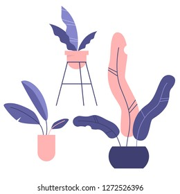 Set of three potted houseplants. Decorative elements. Flat editable vector illustration, clip art