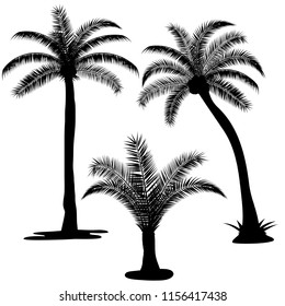 set of three silhouettes of palm trees  on white background