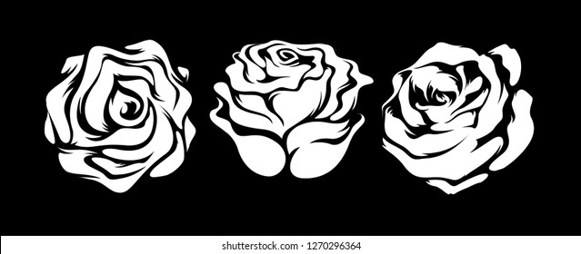 Set of three vector white rose flowers isolated on a black background. - Vector