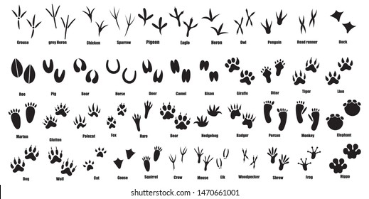 Set of traces of animals and birds. Collection of silhouetted footprints of wild animals. Vector illustration for children. Black-white drawing of the trail from the paws of forest residents.