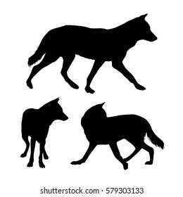 Set of tree black vector silhouettes of wolf on white background