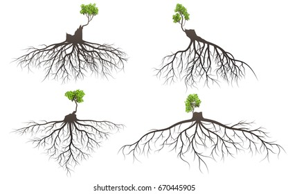 Set of tree roots with germinate limb. silhouette vector Illustration.