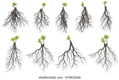 Set of tree roots with germinate limb.  vector Illustration.