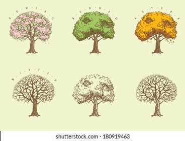 Set of trees at engraving style. Trees with green,  orange and without leaves  and with blossoming.