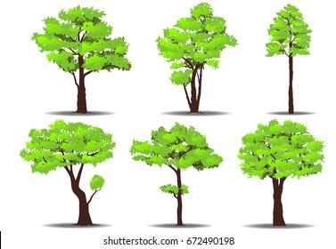 Set of trees on white background. Nature vector illustration.