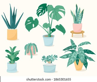 Set of trendy house plants in pots: aloe vera, fiddle leaf fig, snake plant, monstera, burros tail, aglaonema, jade plant. Succulents and leafy plants. Decor for the interior of the house.