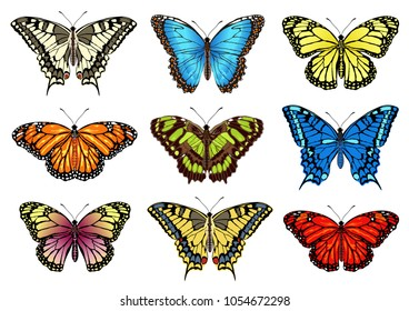 Set of tropical colorful butterflies. Realistic vector illustrations isolated on white background.