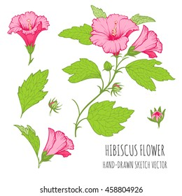 Set of tropical floral ornaments for design greeting cards. Hibiscus. Colorful Vector sketch, hand-drawn.