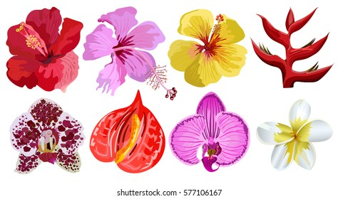 Set of tropical flowers.