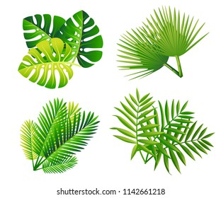 Set of tropical green leaves. Flat style palm leaf. Exotic plants icon. Vector illustration isolated on white background.