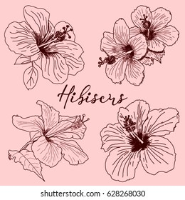 Set of tropical Hibiscus flowers. Hand drawn sketch. Vector illustration isolated. Template for the design. Drawing with beautiful flowers.