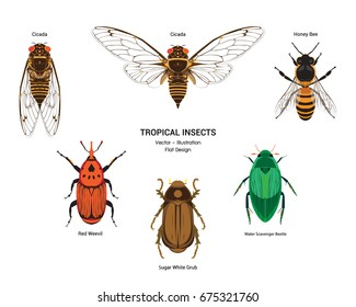 Set of tropical insects vector isolated on white background. Cicada, Honey bee, Red weevil, White sugar grub and Scavenger water beetle. Colorful flat design vector of tropical insects.