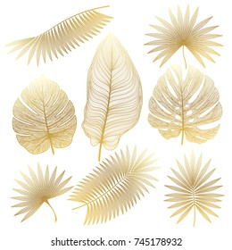 Set tropical leaf isolated. Vector illustration.