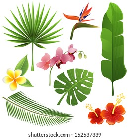 Set of tropical leaves and flowers