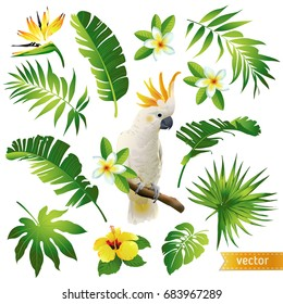 Set with tropical leaves, flowers and birds. Vector illustration. Large hand drawn watercolor.