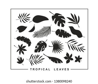 Set of tropical leaves and flowers for modern surface design. Vector floral collection in black and white style.