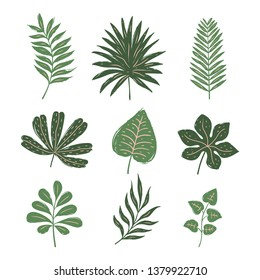 Set of tropical leaves. Hand drawn vector elements