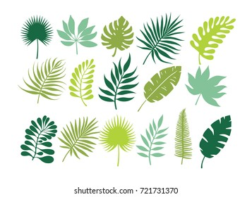Set of tropical leaves. Jungle foliage. Green palm leaves on the white background.Tropical vector set